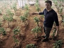 The-Martian-crops